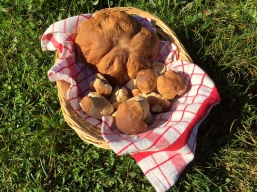 eekhoorntjesbrood-van-eigen-terrein