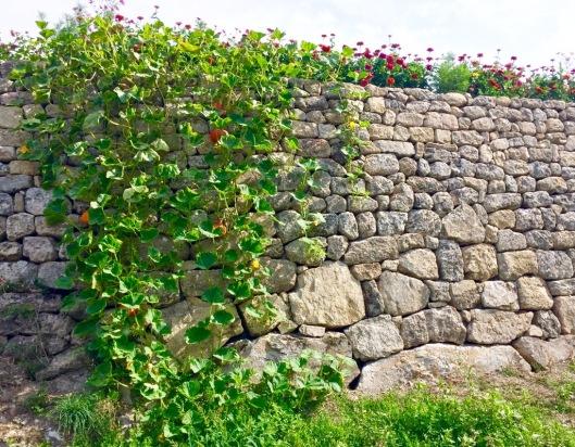 Weelderige pompoenen over de muur